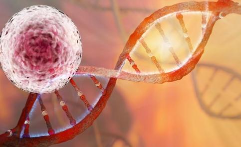 Skuteczność komórek macierzystych w medycynie ortopedycznej